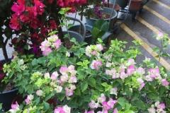 Flowermarket1