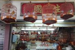 Birdmarket3