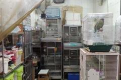 Birdmarket4