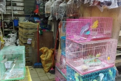 Birdmarket5