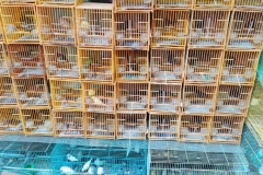 Birdmarket6